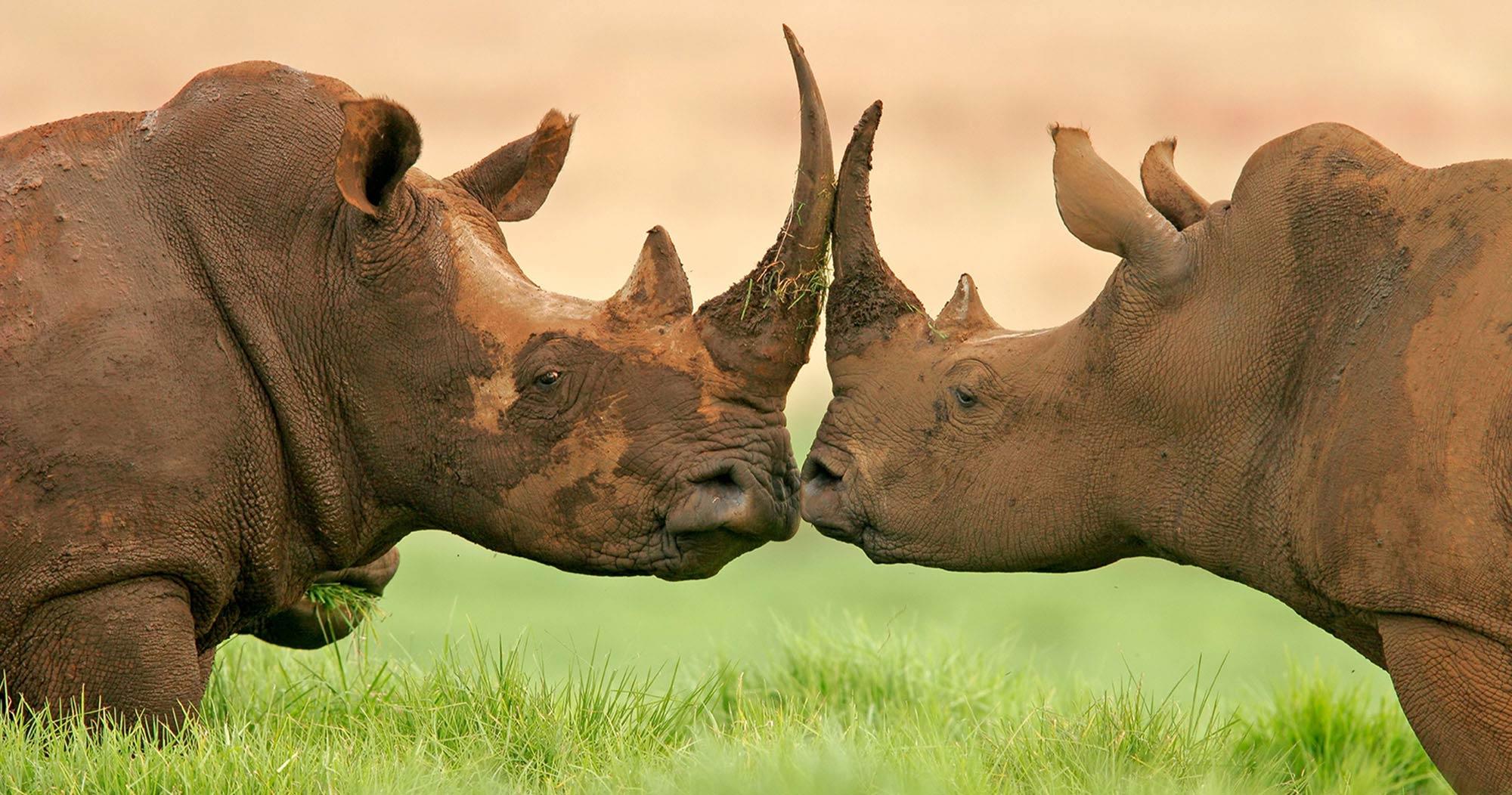 big five safari south africa manyeleti game reserve