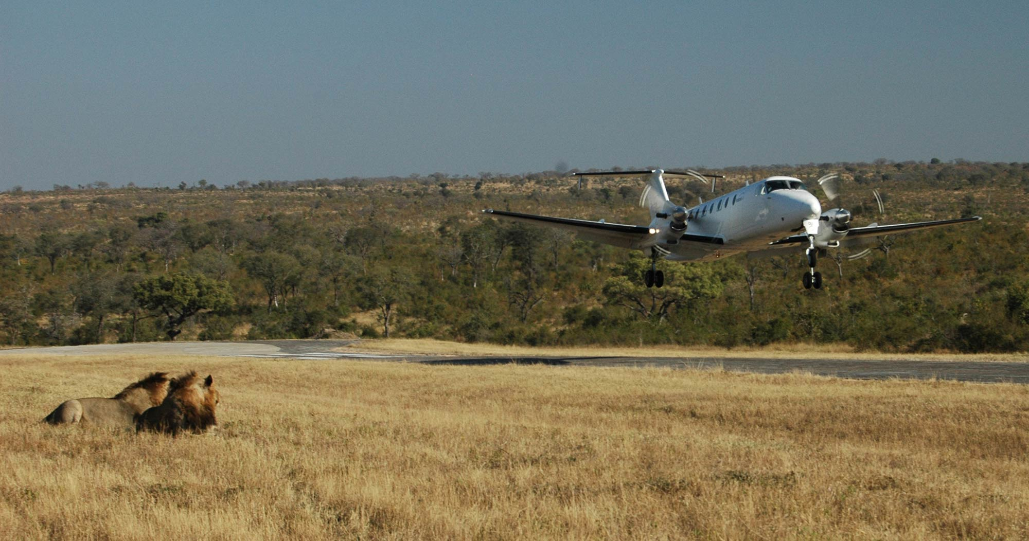 A lodge hop is an exciting way of travelling to Manyeleti