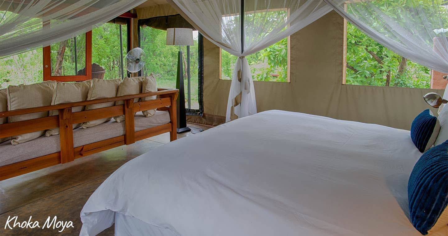 Enjoy a luxury safari in South Africa - Honeyguide Camps